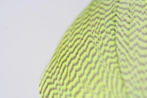 Mallard Flank Dyed Chartreuse