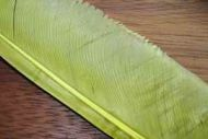 Turkey Biot Quills Light Olive
