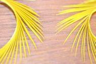 Goose Biots Golden Olive