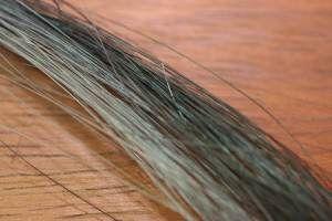 Horse Tail Hair Dark Blue Dun