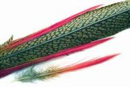 Golden Pheasant Tail Natural