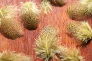 Grey Partridge Neck Dyed Olive