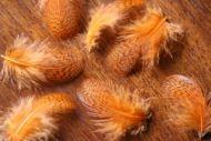 Grey Partridge Neck Dyed Orange