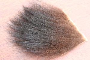 Black Bear Skin Patch