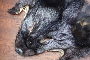 Silver Fox Mask Natural