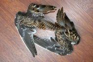 Snipe Wings