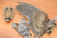 Woodcock Body Plumage 2gram Pack