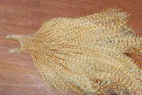Metz Grade 3 Cock Cape Barred Ginger
