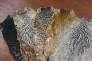5 Dun Coloured Indian Hen Capes