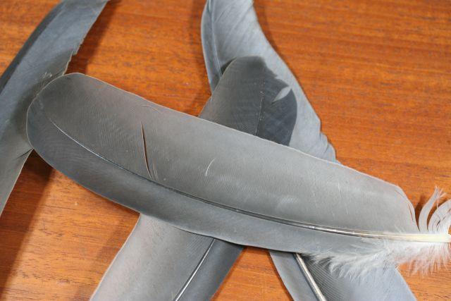Grey Heron Wing Quills
