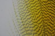 Dyed Picric Yellow