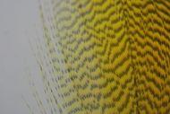Mallard Flank Dyed Picric Yellow