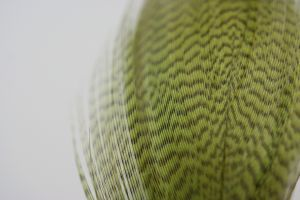 Mallard Flank Dyed Olive