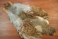 English Grey Partridge Skin