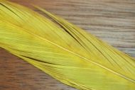 Cock Pheasant Tails Dyed Yellow