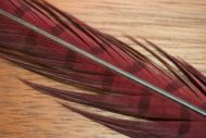 Cock Pheasant Tails Dyed Claret