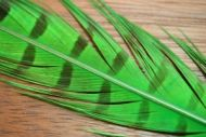 Cock Pheasant Tails Dyed Green