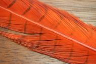 Cock Pheasant Tails Dyed Orange