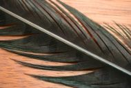 Cock Pheasant Tails Dyed Black