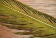 Cock Pheasant Tails Dyed Sunburst Olive
