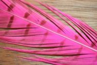 Cock Pheasant Tails Dyed Hot Pink