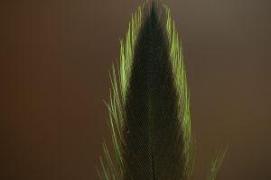 Indian Badger Hen Cape Dyed Golden Olive