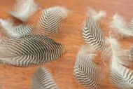 Teal Flank Feathers 1gram pck.
