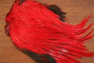 Lathkill Dyed Indian Badger Salmon Cock Capes Red