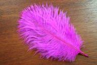 Salmon Turbo Plumes Fuchsia Pink/Magenta