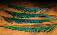 Peacock Swords Natural