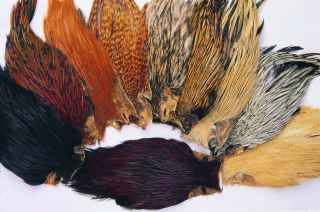 Indian Cock Cape Dk. Golden Badger/Greenwell